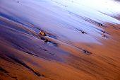 Beach Sheen Still Life