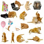 Cat Collection On White Background