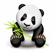 image of pandas  - Little panda and bamboo isolated on white - JPG