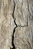 Cracked Old Wood