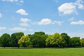stock photo of manicured lawn  - Sky with cumulus clouds over tree line and lawn - JPG