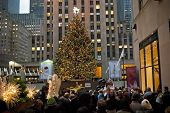 Crowd and Tree
