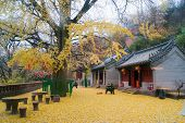 Постер, плакат: Temple during autumn of China in Qingtao