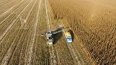 Combine Harvester Pours Corn Grain Into The Truck Body. Harveste poster