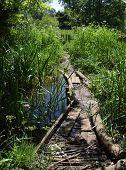 River Path