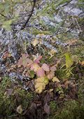 Collection Of Autumn Leaves In Tree Nurseries