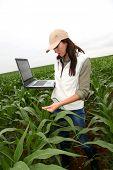 Agronomist examining plant in corn field