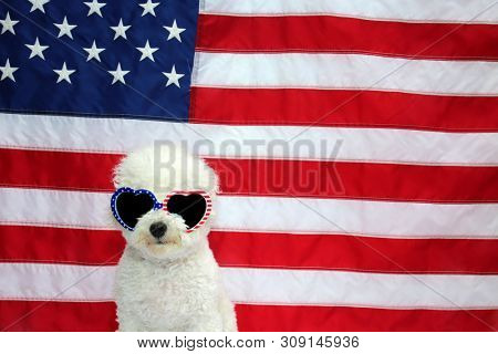 poster of Small White dog with American Flag. Small White dog represents 4th of July Concept with American Fla
