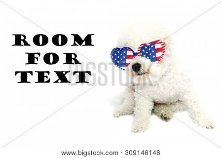 poster of Bichon Frise Dog. Small White dog. Isolated on white. Room for text. Clipping path.