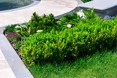 A Flower Bed With Young Plants Of Evergreen Leafy Bushes Of Boxwood And Pine Trees With Needles In T poster