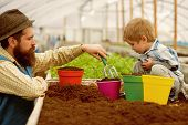 Planting Together. Father And Son Planting Together In Greenhouse. Happy Family Planting Together. P poster