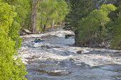Springtime Whitewater In  Colorado