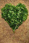 Moringo Tree Leaves. poster