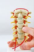 Spine Model with Pointing Finger