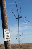 Black Birds on the line in a field