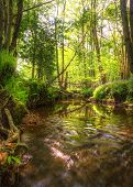 stock photo of upstream  - Beautiful image from very low point of view along stream flowing upstream with deep vibrant lush foliage on either bank and sunlight brightening up background - JPG