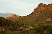 Arizona's Lost Dutchman State Park