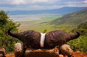 Ngorongoro crater in Tanzania, Africa. Ngorongoro Conservation Area