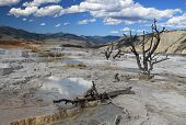 Upper Terrace In Yellowstone Np