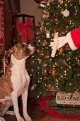 Santa Giving a Present