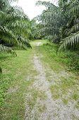 Palm Farm Crop Outdoor Way