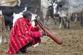 Masai man in traditional red shuka holding a gourd of blood, Kenya, Africa