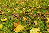 Autumn Leaves - Herbstlaub