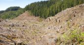 Clear Cut Logging Slope