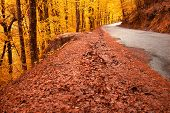 Beautiful autumn landscape with road and beautiful colored trees