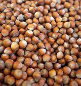 Group of hazelnuts