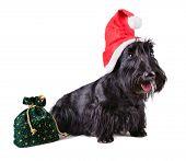 Christmas Dog In Santa Cap