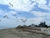 Seagulls In Flight 9