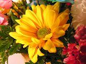 Flowers Closeup.