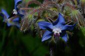 Beautiful Blue Blossom