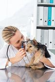 Female veterinarian examining ear of dog in clinic