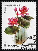 Postage Stamp Russia 1984 Lotus, Aquatic Plant