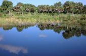 Reflexion von Palmen und Wolken am See In Florida