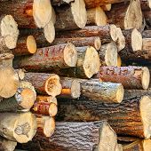 Wood Harvesting Background