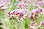 Pink flower in summer field