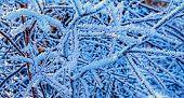 Frozen Twigs In Forest