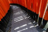 Light and shadow of thousands of Torii, Fushimi Inari Taisha Shrine, Kyoto, Japan.