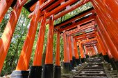 Thousands of Torii with stone steps, Fushimi Inari Taisha Shrine, Kyoto, Japan.