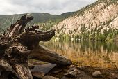 picture of cottonwood  - Dead tree trunk and roots in Cottonwood lake in the valley on clear calm day with the lake stretching off to a distant kayaker on the lake.