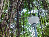 Lamp Pillar Under Branch Of A Banyan Tree