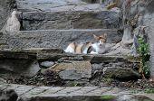 Cat On Old Steps
