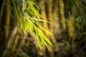 blurred bamboo forest, garden in china.