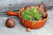 stock photo of bolete  - Fresh boletes and moss in terracotta pan - JPG