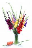 stock photo of gladiolus  - a colorful gladiolus bouquet on white background - JPG
