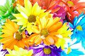 Vibrant Multicolored Daisy Background