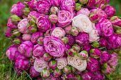 Beautiful bouquet of pink roses on grass